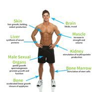Testosterone tăng cường sinh lý nam giới